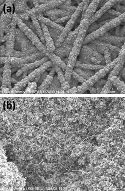 SEM images of GDL surface